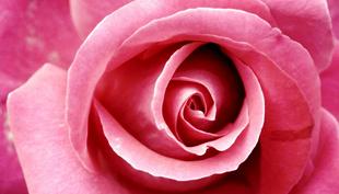 Лендинг про розы из Эквадора